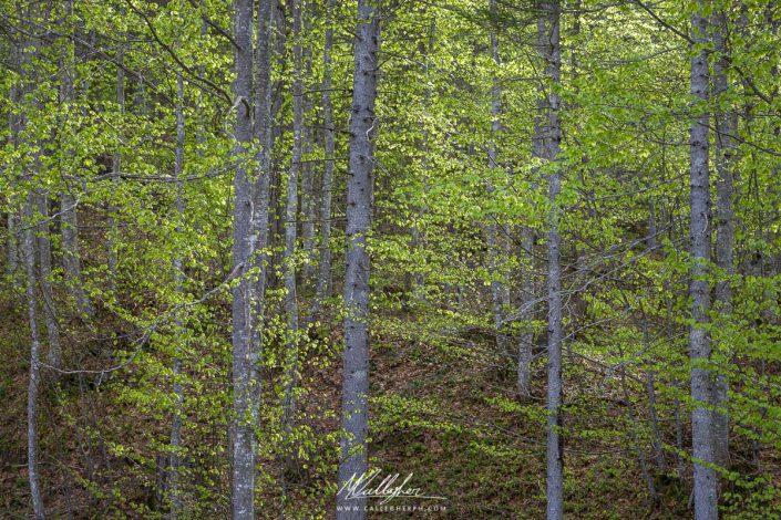 Primavera nel bosco