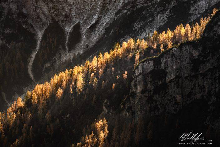 Larici della Val Campestrin